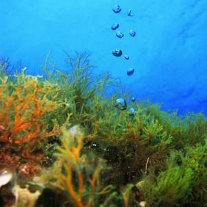 8 Dives