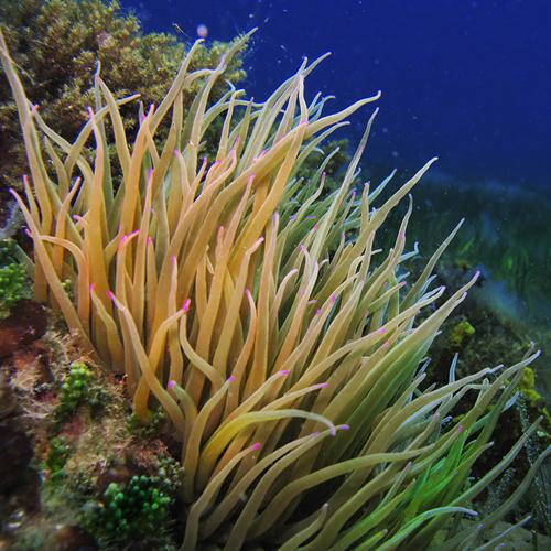 4 Dives